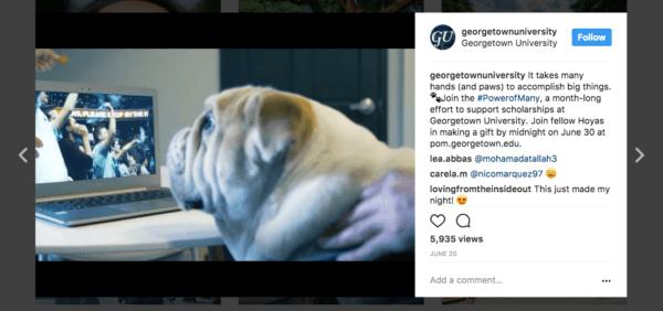 Georgetown University's Jack the Bulldog.